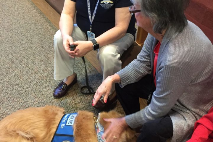 comfort dogs immanuel lutheran church joplin missouri