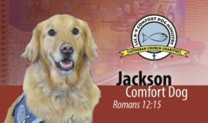 Jackson Comfort Dog business card