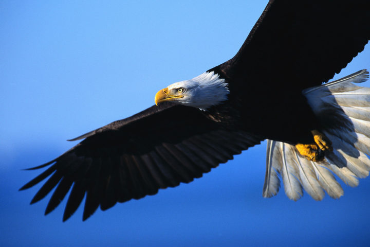 On Eagles' Wings 1