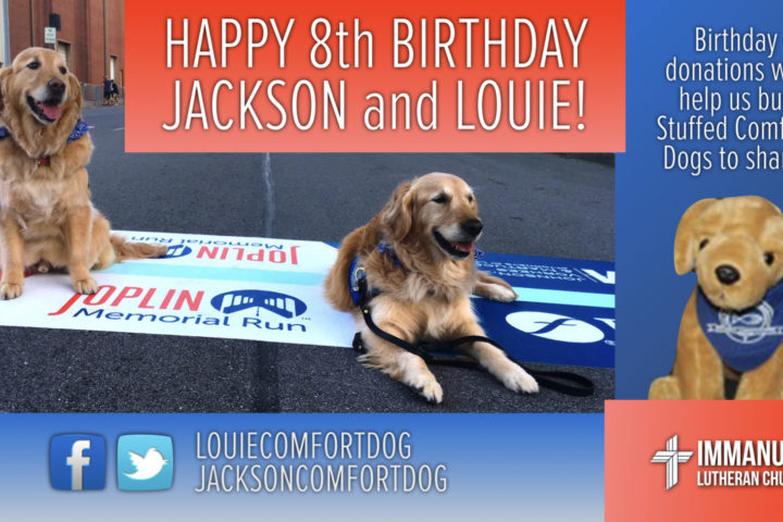 louie comfort dog jackson comfort dog immanuel lutheran church martin luther school joplin missouri 8th birthday