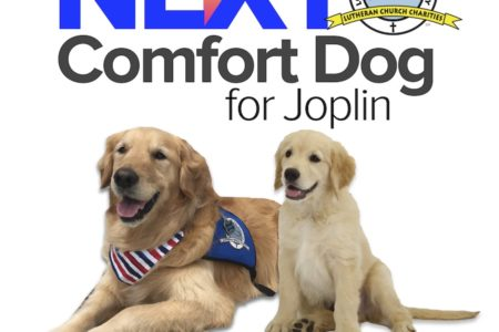 Plans For Joplin's Next Comfort Dog 7