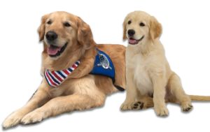 louie comfort dog with comfort dog puppy
