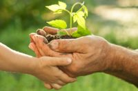 hands holding a seedling. stewardship. immanuel lutheran church lcms. joplin missouri.