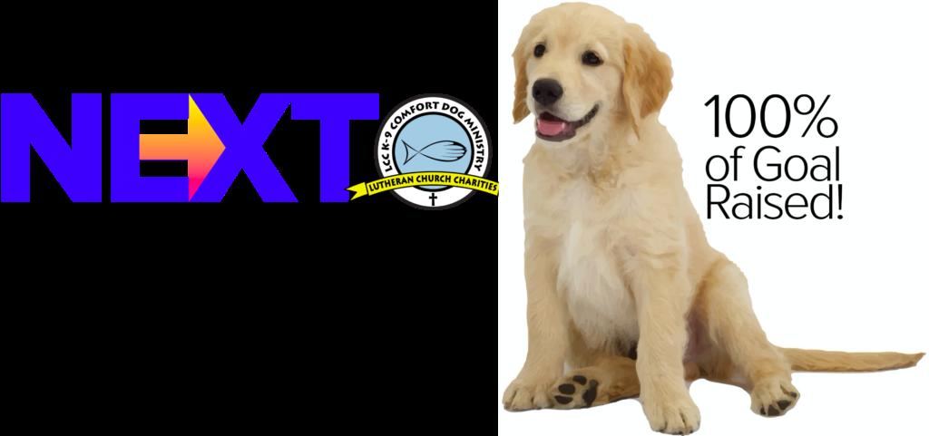 next comfort dog joplin immanueljoplin comfort dogs puppy